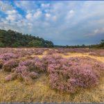 hoge veluwe national park  4 150x150 HOGE VELUWE NATIONAL PARK