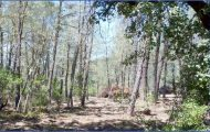 MENDOCINO NATIONAL FOREST MAP CALIFORNIA_2.jpg