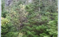MOUNT MANSFIELD STATE FOREST MAP VERMONT_23.jpg