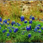 pedernales falls state park map texas 4 150x150 PEDERNALES FALLS STATE PARK MAP TEXAS