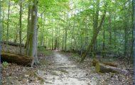 PRINCE WILLIAM FOREST PARK MAP VIRGINIA_6.jpg