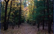 STATE FORESTS IN VERMONT_16.jpg