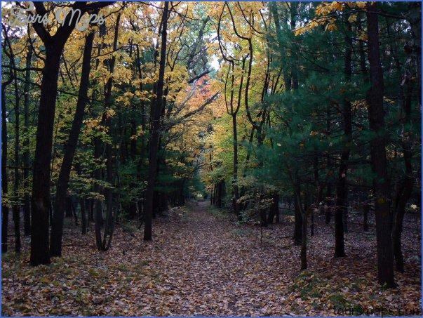 state forests in vermont 16 STATE FORESTS IN VERMONT