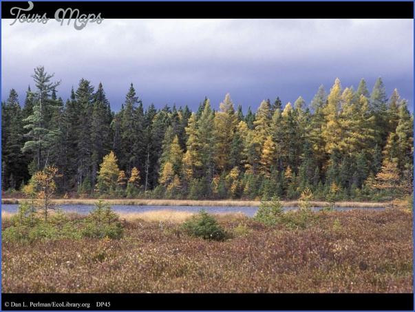state forests in vermont 7 STATE FORESTS IN VERMONT