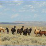 Wyoming Vacations _9.jpg