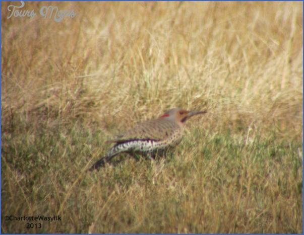 Beaverhill Bird Observatory _10.jpg