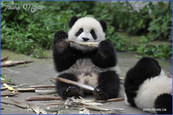 baedeker special giant panda 52 Baedeker Special Giant Panda