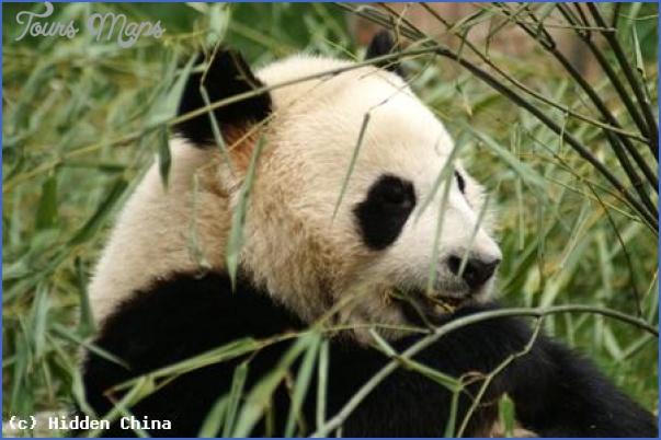 chinas flora and fauna 21 Chinas Flora and Fauna