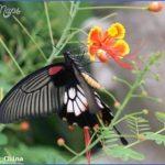 chinas flora and fauna 22 150x150 Chinas Flora and Fauna