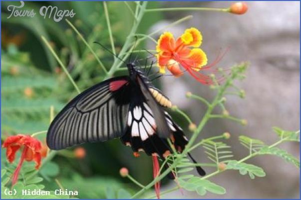 chinas flora and fauna 22 Chinas Flora and Fauna