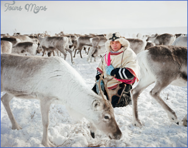 lapps with reindeer northern finland 2 Lapps with reindeer Northern Finland
