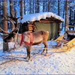 lapps with reindeer northern finland 4 150x150 Lapps with reindeer Northern Finland