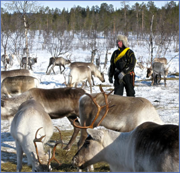 lapps with reindeer northern finland 5 Lapps with reindeer Northern Finland