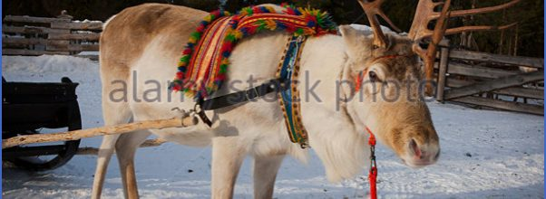 Lapps with reindeer (Northern Finland)_8.jpg