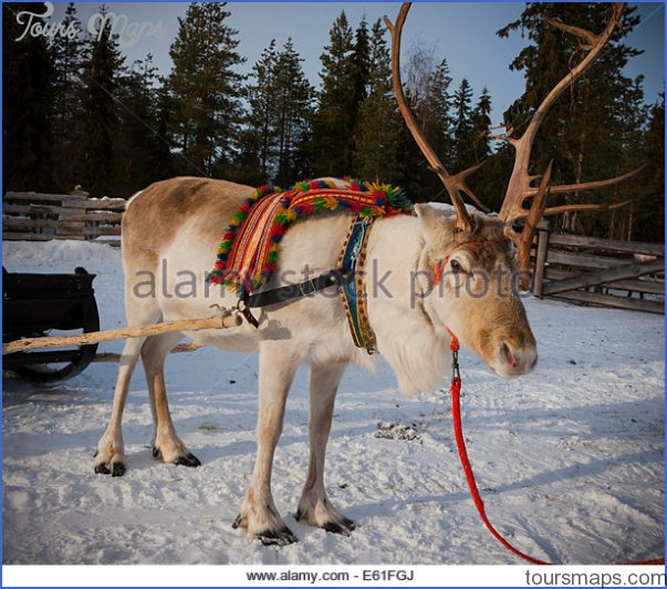 lapps with reindeer northern finland 8 Lapps with reindeer Northern Finland