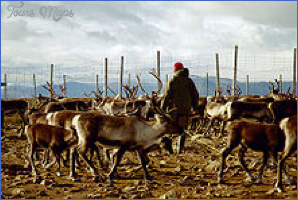 lapps with reindeer northern finland 9 Lapps with reindeer Northern Finland
