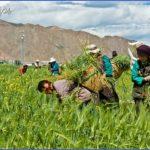 tibet 6 150x150 Tibet