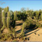 holiday in gran chaco 7 150x150 Holiday in Gran Chaco