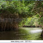 mangrove forest national park shenzhen 11 150x150 MANGROVE FOREST NATIONAL PARK SHENZHEN