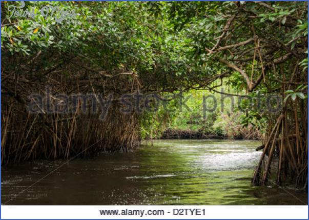 mangrove forest national park shenzhen 11 MANGROVE FOREST NATIONAL PARK SHENZHEN