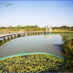 mangrove forest national park shenzhen 14 150x150 MANGROVE FOREST NATIONAL PARK SHENZHEN