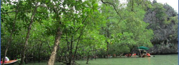 MANGROVE FOREST NATIONAL PARK SHENZHEN_16.jpg