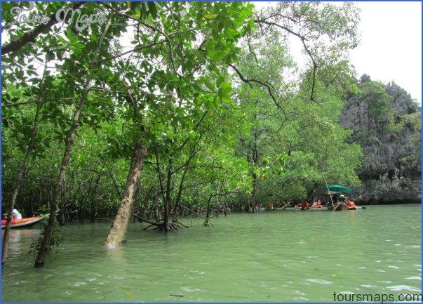 mangrove forest national park shenzhen 16 MANGROVE FOREST NATIONAL PARK SHENZHEN