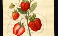 """Strawberries """"Underground"""" Boston US Map & Phone & Address_0.jpg"""