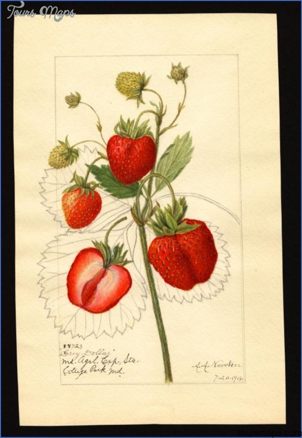 "Strawberries ""Underground"" Boston US Map & Phone & Address_0.jpg"