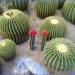 xian hu botanical gardens shenzhen 1 150x150 XIAN HU BOTANICAL GARDENS SHENZHEN