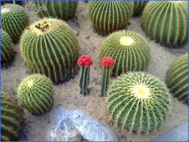 xian hu botanical gardens shenzhen 1 XIAN HU BOTANICAL GARDENS SHENZHEN