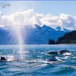 alaska cruises 15 150x150 ALASKA CRUISES
