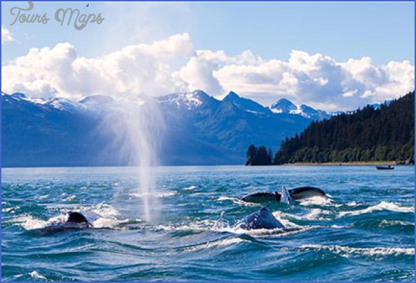 alaska cruises 15 ALASKA CRUISES