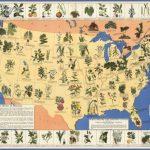 lgmedicinalplants 150x150 Victorian Society in America US Map & Phone & Address