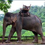 tour guide asia a rich cultural experience 1 150x150 Tour Guide Asia – A Rich Cultural Experience