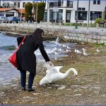 traveling to swan lake  6 150x150 Traveling to Swan Lake
