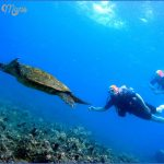 turtles of oahu a quick guide for travelers 11 150x150 Turtles of Oahu: A Quick Guide for Travelers