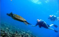 Turtles of Oahu: A Quick Guide for Travelers_11.jpg