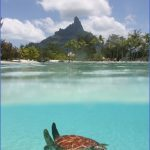 turtles of oahu a quick guide for travelers 2 150x150 Turtles of Oahu: A Quick Guide for Travelers