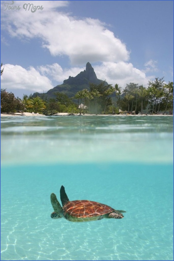 turtles of oahu a quick guide for travelers 2 Turtles of Oahu: A Quick Guide for Travelers