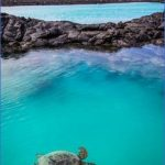 turtles of oahu a quick guide for travelers 4 150x150 Turtles of Oahu: A Quick Guide for Travelers