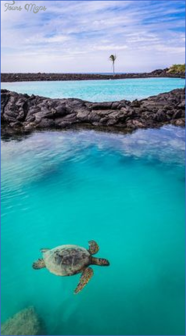 turtles of oahu a quick guide for travelers 4 Turtles of Oahu: A Quick Guide for Travelers