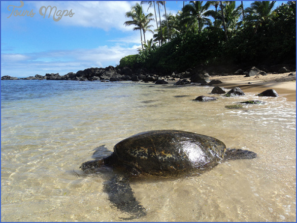 turtles of oahu a quick guide for travelers 8 Turtles of Oahu: A Quick Guide for Travelers