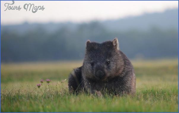 visit to tasmania 3 Visit to Tasmania