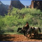 zion national park guide for tourist  1 150x150 Zion National Park Guide for Tourist