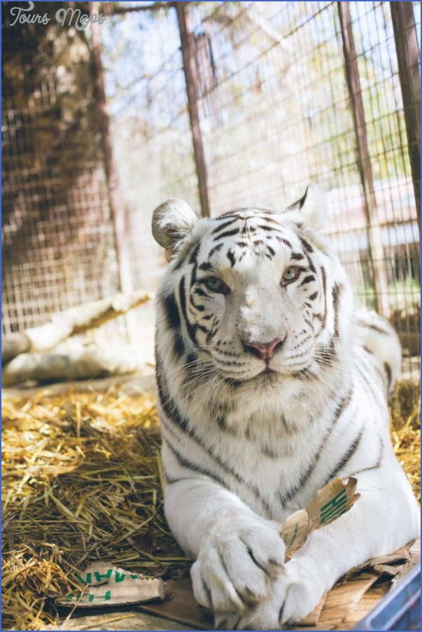 become an advocate for animal restoration with zoological wildlife foundation 0 Become an advocate for animal restoration with zoological wildlife foundation
