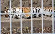 Become an advocate for animal restoration with zoological wildlife foundation_1.jpg