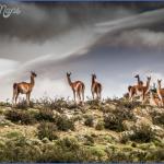 best adventure honeymoon awasi patagonia 4 150x150 BEST ADVENTURE HONEYMOON AWASI, PATAGONIA
