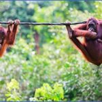 borneo malaysia 14 150x150 Borneo, Malaysia