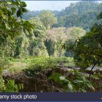 borneo malaysia 6 150x150 Borneo, Malaysia